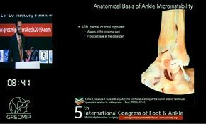 Anatomical basis Ankle
